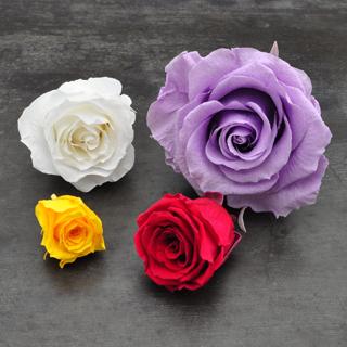 バラの大きさにつての画像